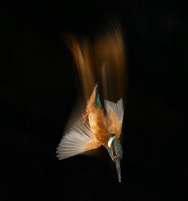 Amazing Photos Show the Movements of Diving Kingfisher After Photographer Waited Two Years for Perfect Pics